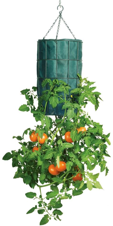 tomato planter gardener s revolution upside down tomato planter the green head