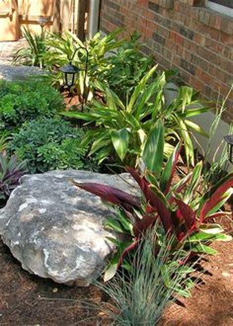 ideas  south texas landscaping  pinterest