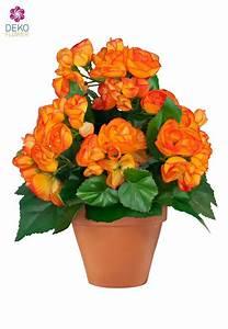 Künstliche Blumen Für Draußen : k nstliche begonie orange 28 cm ~ Michelbontemps.com Haus und Dekorationen