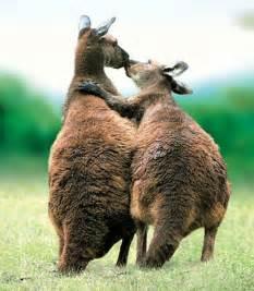 Adorable animals kissing | Amazing Creatures