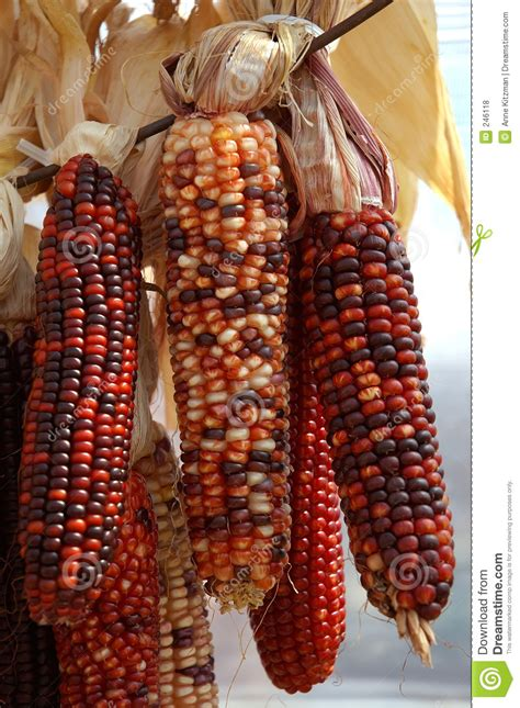 Indian Image by Indian Corn Royalty Free Stock Photos Image 246118