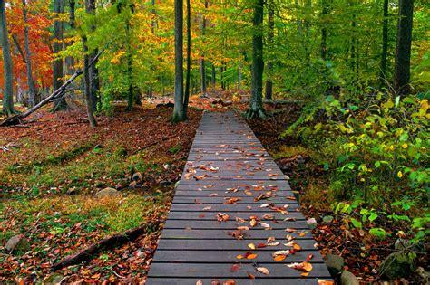 Beautiful Fall Backgrounds Hd by Beautiful Autumn Season Wallpapers Hd Wallpapers