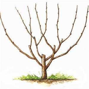 Taille De Cerisier : cerisier 39 bigarreau burlat 39 taille en gobelet en pot pot ~ Melissatoandfro.com Idées de Décoration