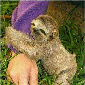 17 Best images about Sloth Hugs on Pinterest | Stuffed ...