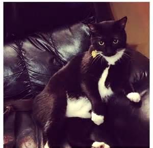 Cute Tuxedo Cat Kittens
