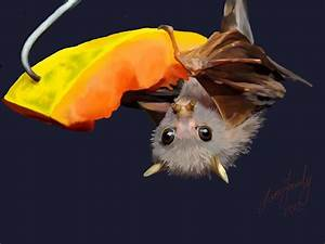 330 best images about Love BATS on Pinterest | Australia ...
