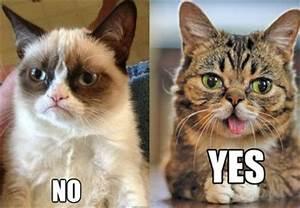 Grumpy Cat vs Lil Bub | Advertising & media | Pinterest