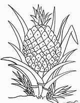 Pineapple Coloring Hawaiian Fruit Template sketch template