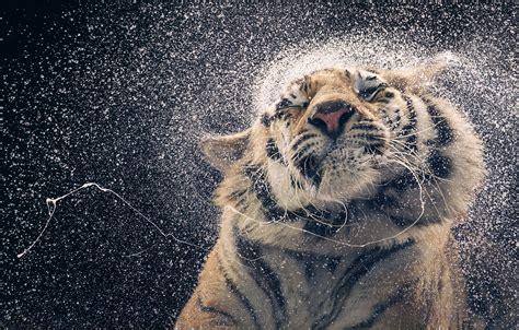 fotos de animales en extincion como nunca los habias visto
