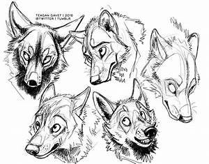 Wolf Teeth Drawing At Getdrawings