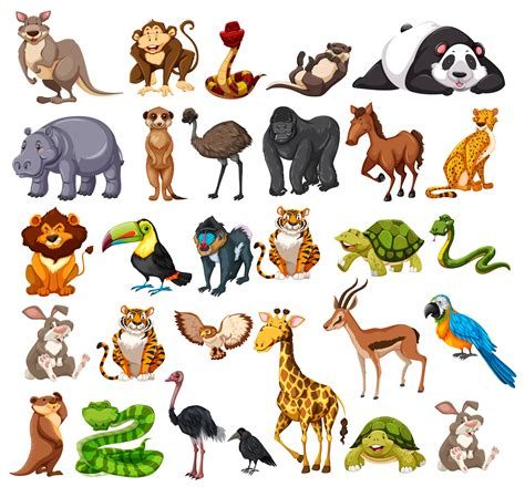 Different types of wild animals on white Download Free