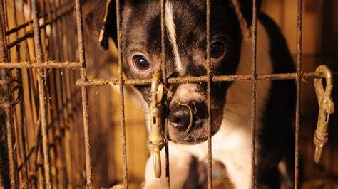 petition   large scale animal breeding facilities