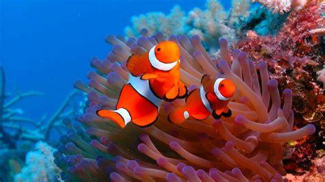 hd ocean sea life wallpapers  images