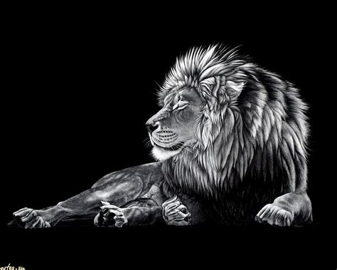 unusual wallpaper black lion wallpapers