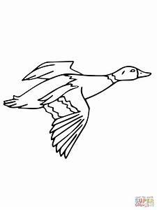 Mallard Duck Drawing At Getdrawingscom Free For