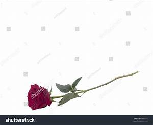 Red Rose On Long Stem With Water Drops Stock Photo 2847716 ...