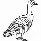 Goose Coloring Sheet Birds Samples Freecoloringsheets sketch template