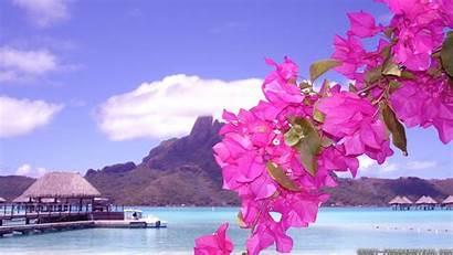 Summer Scenes Flowers Wallpapers Frankenstein Crazy Beach