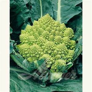 Blumenkohl Pflanzen Abstand : samen saatgut blumenkohl 39 romanesco 39 brassica oleracea botrytis samen ~ Whattoseeinmadrid.com Haus und Dekorationen