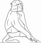 Baboon Baboons Coloringpages101 Babouin sketch template