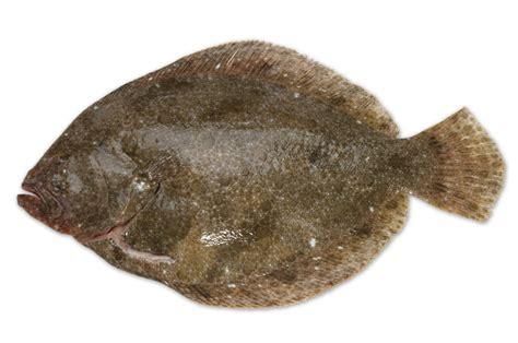 fresh fish  wing  st mawes cornish fish merchants