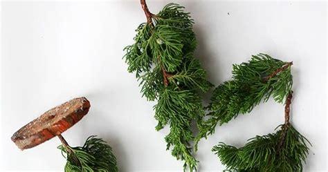 Diy Fresh Mini Christmas Trees  Christmas On The Way