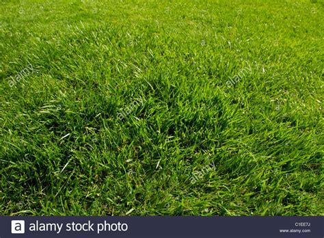 Grass Lawn Green Landscape Turf Sod Garden Yard Grow Fresh
