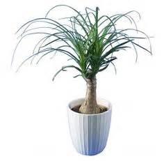 Arbuste D Intérieur : plante pendante interieur fleuriste bulldo ~ Premium-room.com Idées de Décoration