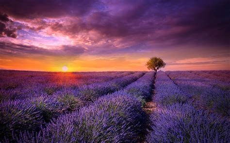 provence field lavender sunset wallpapers 1680x1050 779399