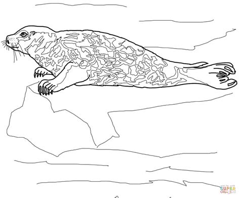 Leopard Seal Coloring Pages Download And Print For Free