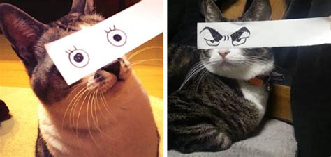 anime japanese cat cat owners in japan are giving their cats anime