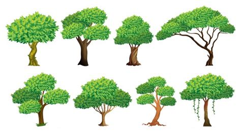 Illustration Of A Set Of Many Trees Vector