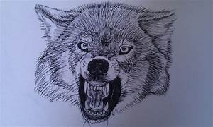 The gallery for --> Wolf Snarling Front View