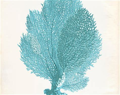 sea fans for sale sea fan etsy