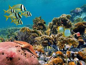 Top 10 Fascinating Coral Reefs | Places To See In Your ...