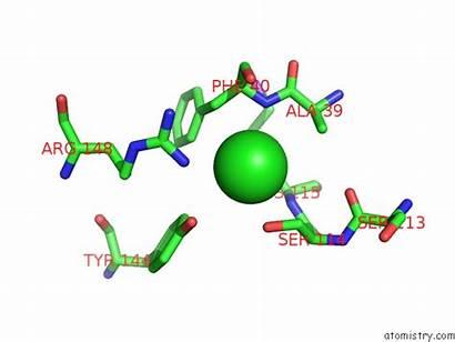 Chlorine Pdb Neisseria Meningitidis Serogroup Polysaccharide Acetyltransferase