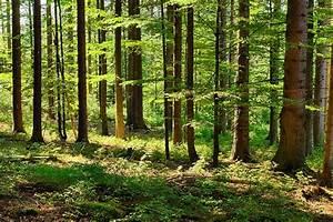 Understanding the Limiting Factors in a Rainforest Ecosystem
