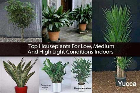 best small indoor plants low light top houseplants for low medium and high light conditions
