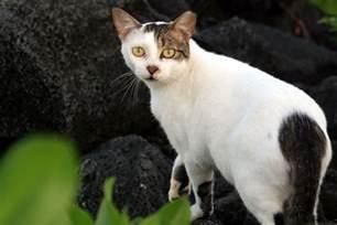 cats feral cat