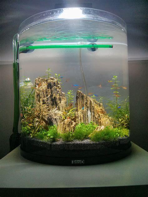 60l bow uk aquatic plant society
