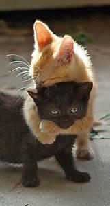 Lustige, Katzen, Bilder, Zum, Totlachen