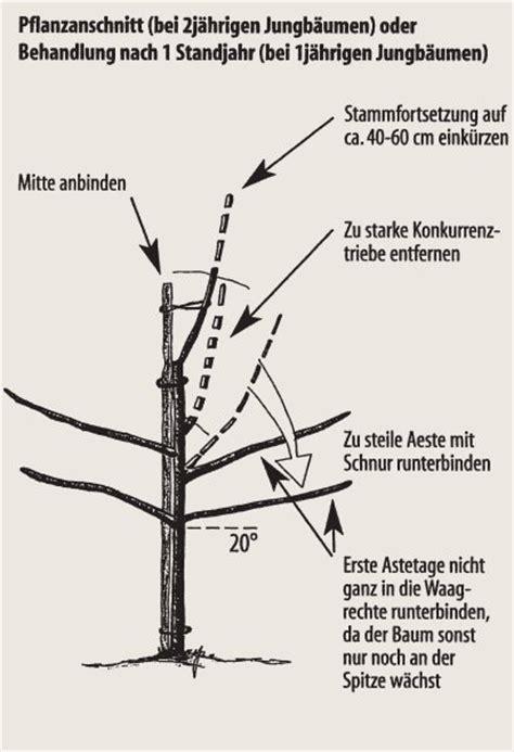 apfelbaum schneiden anleitung weinreben schneiden wann weinreben schneiden anleitungen