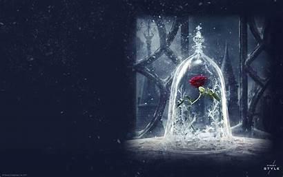 Beast Beauty Disney Background Wallpapers Magic Rose