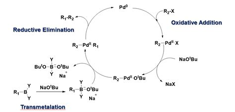Suzuki Coupling Reaction by File Mechanism Of Suzuki Coupling Reaction Png