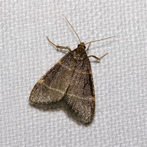 moth wiktionary