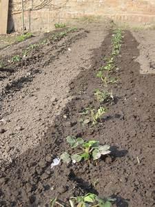 Erdbeeren Wann Pflanzen : erdbeeren pflanzen die wichtigsten tipps erdbeeren pflanzen die wichtigsten tipps ananas ~ Watch28wear.com Haus und Dekorationen