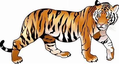 Tiger Clipart Tigers Bengal Animals Vector Cartoon