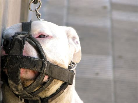 dog muzzles  biting  reviews deals