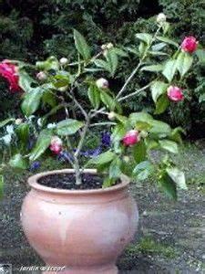 Comment Planter Un Camélia : comment bouturer le cam lia le jardinoscope cot pratique les bons gestes faire au jardin ~ Melissatoandfro.com Idées de Décoration