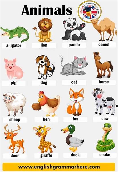 Animals Names Animal English Words Vocabulary Zoo